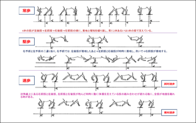 各種歩様の模式図